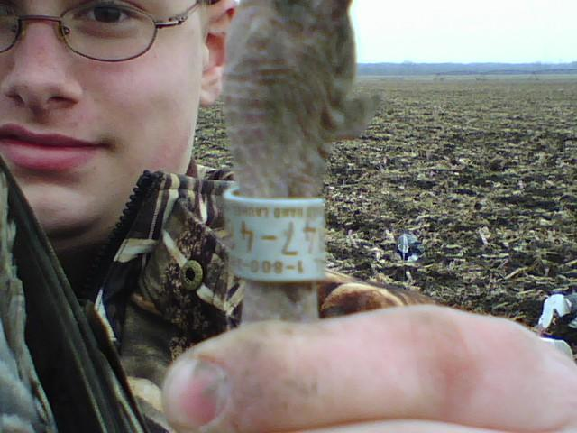 banded snow goose neck band